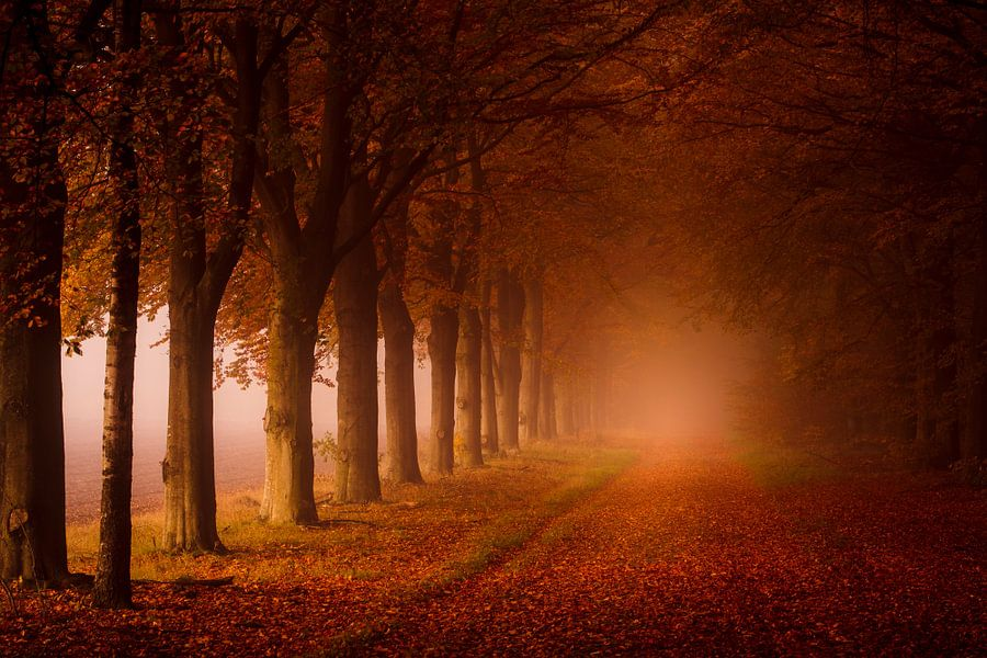 Het bos in.