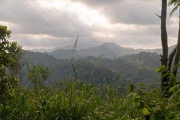 Uitzicht op oerwoud, Ambon, Molukken, Indonesië van Zero Ten Studio