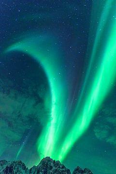 Noorderlicht, poollicht of Aurora Borealis in de nachtelijke hemel boven de Lofoten van Sjoerd van der Wal