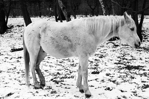 White Horse van