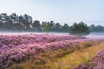 Schapen op een miste heide van zeilstrafotografie.nl