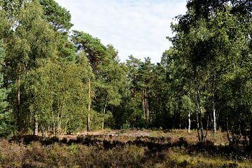 Een heideveld in het bos van Gerard de Zwaan