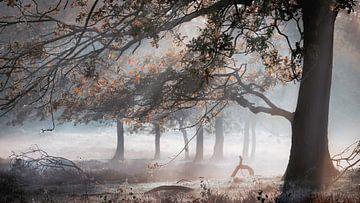 zonnestralen breken door ochtendnevel achter boom van Michel Seelen