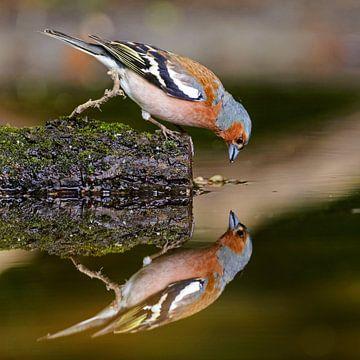 Spiegeltje spiegeltje sur Robert van Brug