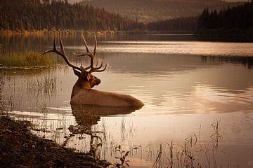 Elk in het water in Banff Nationaal Park Canada tijdens zonsondergang van Christien Brandwijk