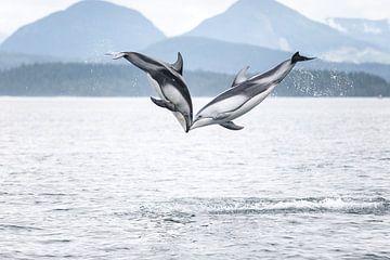 Springende Delfine in British Columbia von Emile Kaihatu