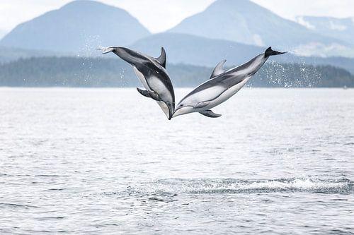 Springende dolfijnen in British Columbia van Emile Kaihatu