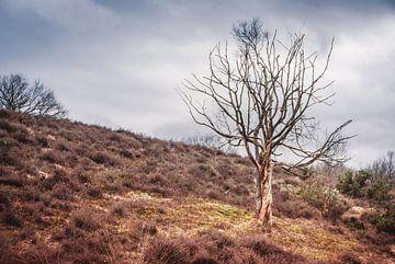 Einsamer Baum auf dem Posbank, Niederlande von Arja Schrijver Fotografie