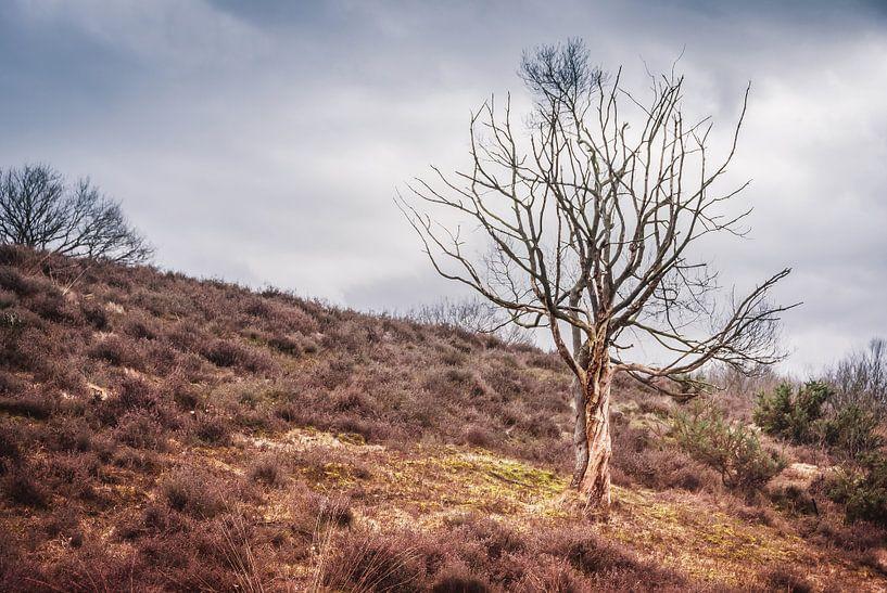 Eenzame boom op de Posbank van Arja Schrijver Fotografie