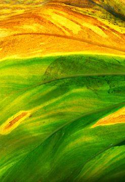 Kleurenpalet van verkleurend blad van Cocky Anderson
