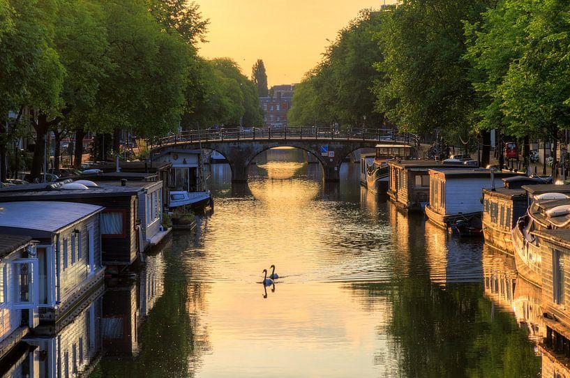 Zwanen in de Amsterdamse grachten van Dennis van de Water