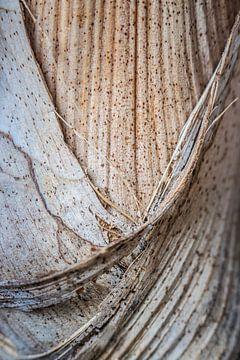 Struktur einer Palmenpflanze von Jefra Creations