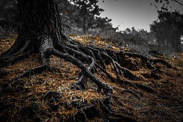 De wortels zijn de oorsprong van het bestaan van Fotografie Jeronimo