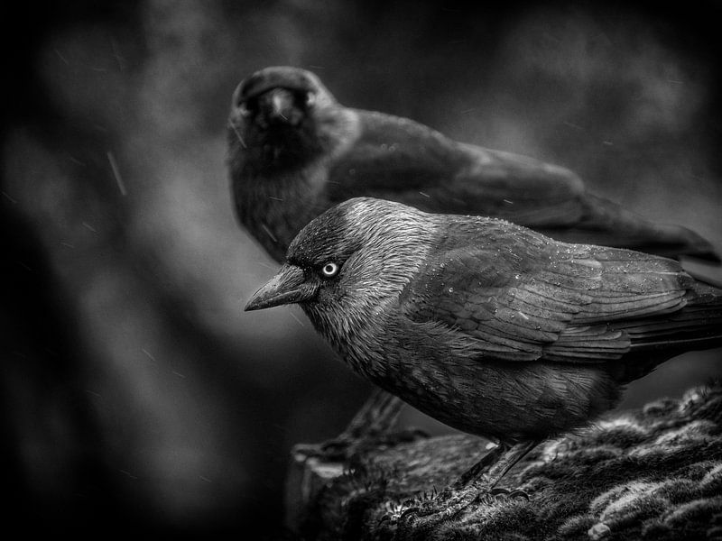 Twee in de regen van Ruud Peters