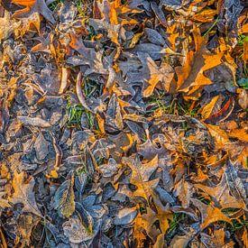 Heiß und kalt im Wald von Fred Leeflang