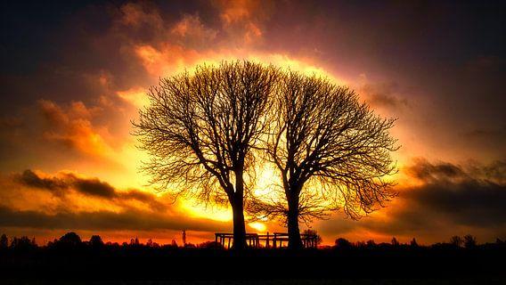 Witte kastanjebomen