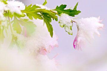 Winter  bloemen onder sneeuw von Marianna Pobedimova
