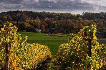 Warme Herbstfarben in Maastricht mit Blick durch die Weinreben des Apsotelhoeve von Kim Willems