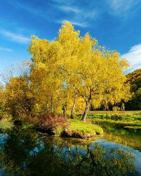 Bomen in herfstkleuren bij de rivier Blue in Blue Murren van Daniel Pahmeier