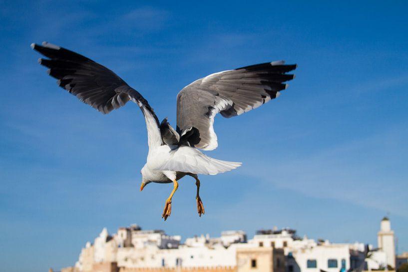 Zeemeeuw boven Essaouira van Johan Zwarthoed