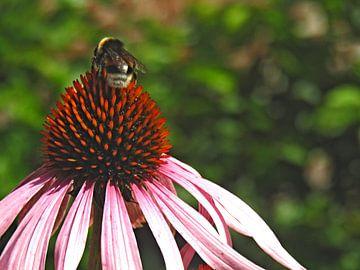 Kijken voor nectar van Zowauwart Of Chance