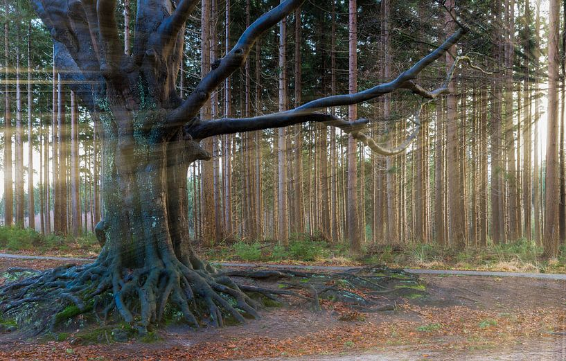 Bakkeveen the Magic Tree  van Kevin Boelhouwer