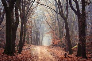 De Wicca bossen van