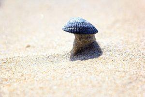 Schelp op een torentje van zand van