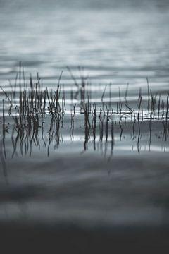 Gras über Wasser, schöne Natur, Naturgebiet, grau grau kalten Winter Gefühl, von Frank van Hulst