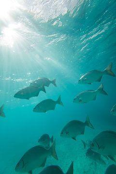 Bonaire onderwater van Andy Troy