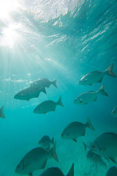 Bonaire onderwater