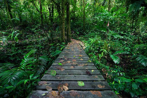 Hiking the Rainforest van Martijn Smeets
