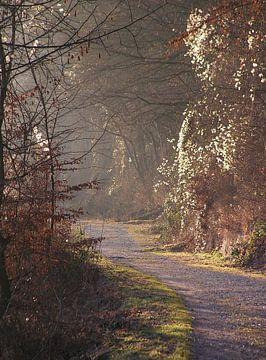 Wege II  von Ilona Picha-Höberth