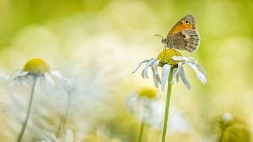 Schmetterling, der auf einer Blume stillsteht. von Jan Linskens