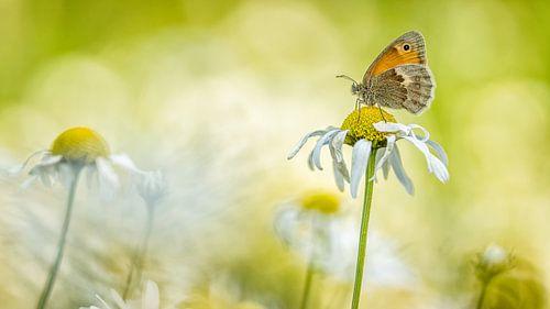 Vlinder rustend op een bloem. van Jan Linskens