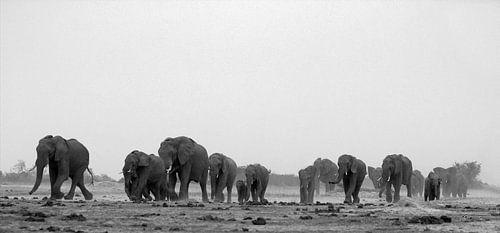 olifanten van anja voorn