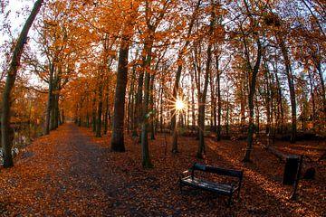 Herbstsonne von peterheinspictures