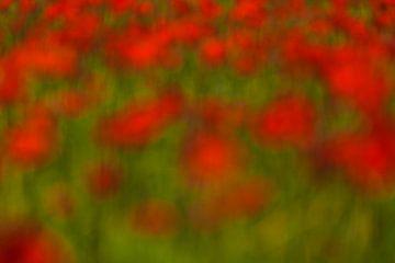 rode vlekken in het groen sur Berend-Jan Bel