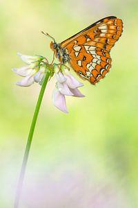 Roodbonte parelmoervlinder (Euphydryas maturna) rustend op een bloem