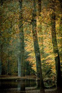 Herfst, Aumn, Automne,Herbst van