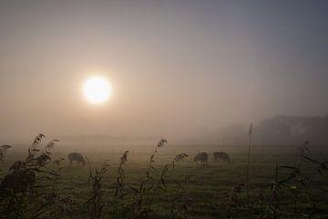 Kühe im Nebel von Moetwil en van Dijk - Fotografie