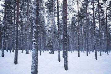 Bomen van jaap vegter