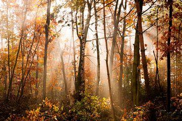Herfst von Beernt Sietsma