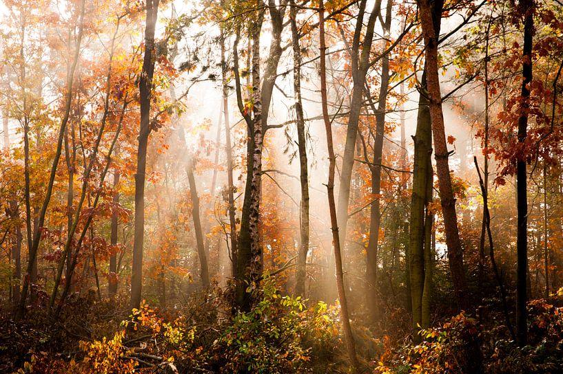 Herfst sur Beernt Sietsma