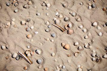 Schelpen op het strand van Vlieland van Gerjanne Dijkstra