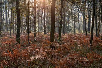 Herfst ochtend in een bos vol varens van Cor de Hamer