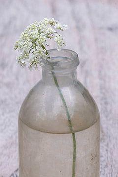 Die Einfachheit einer Wildblume in einer Flasche von Affect Fotografie