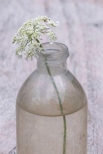 De eenvoud van één veldbloem in een flesje
