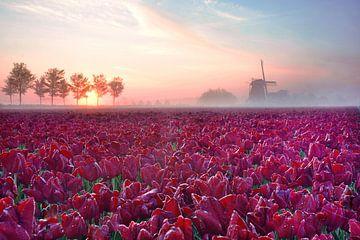 Rode tulpen met molen silhouet