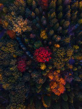 Herfst van boven